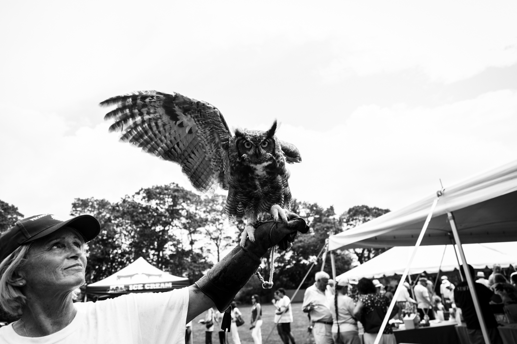 Owl and handler at Peconinic 2018