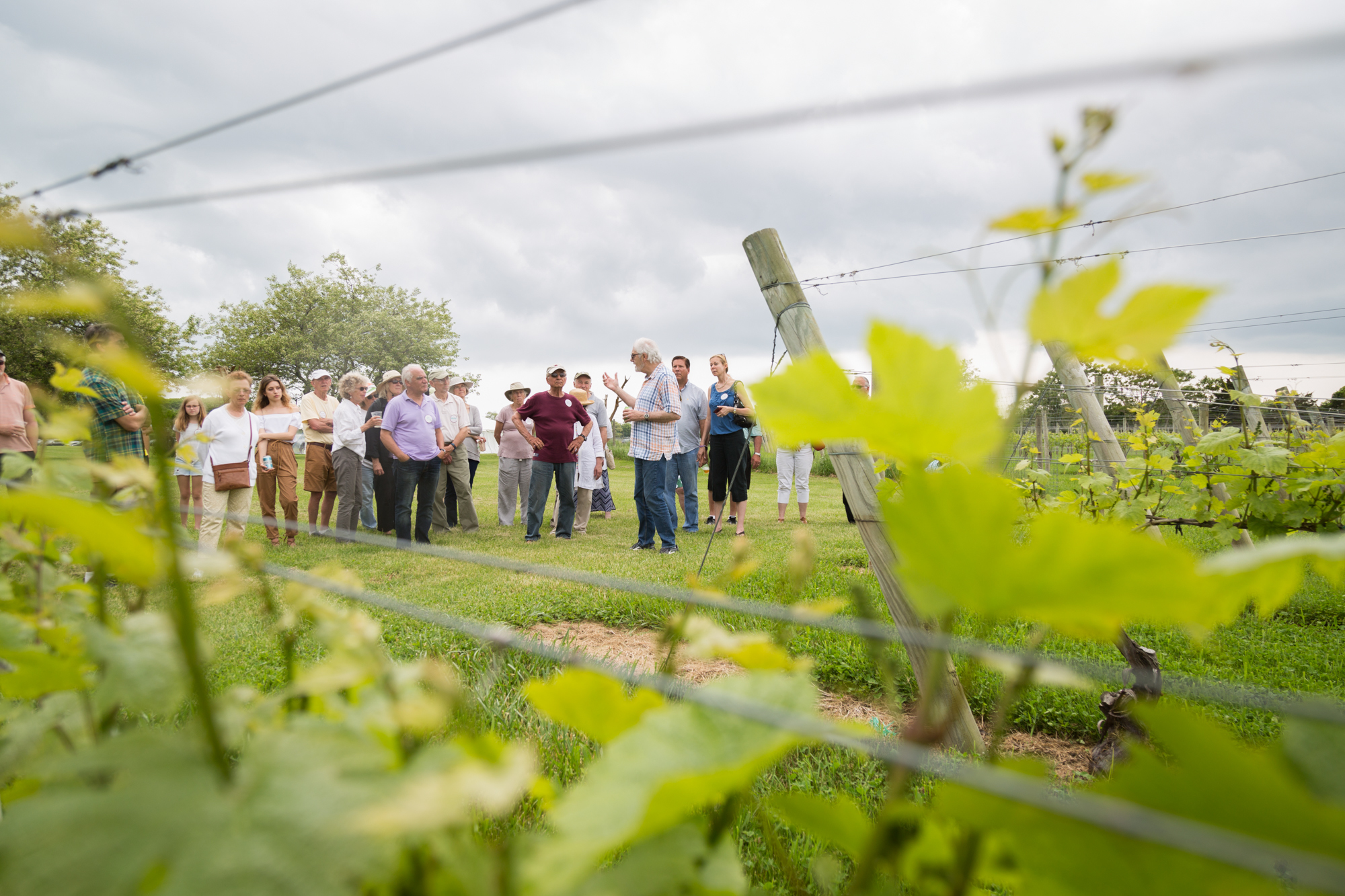 View of attendees through the vines at 2018 Peconinic