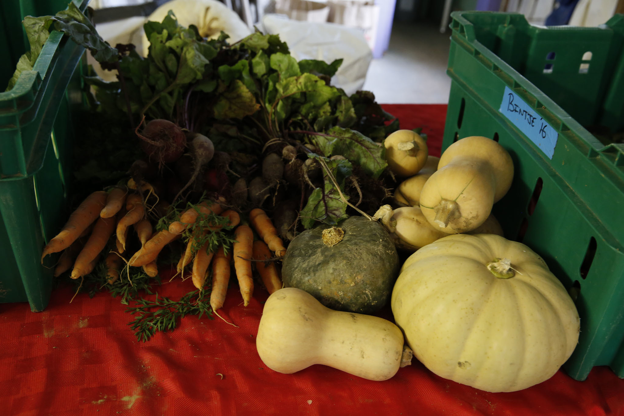 Autumn produce at Quail Hill Farm including carrots and squash