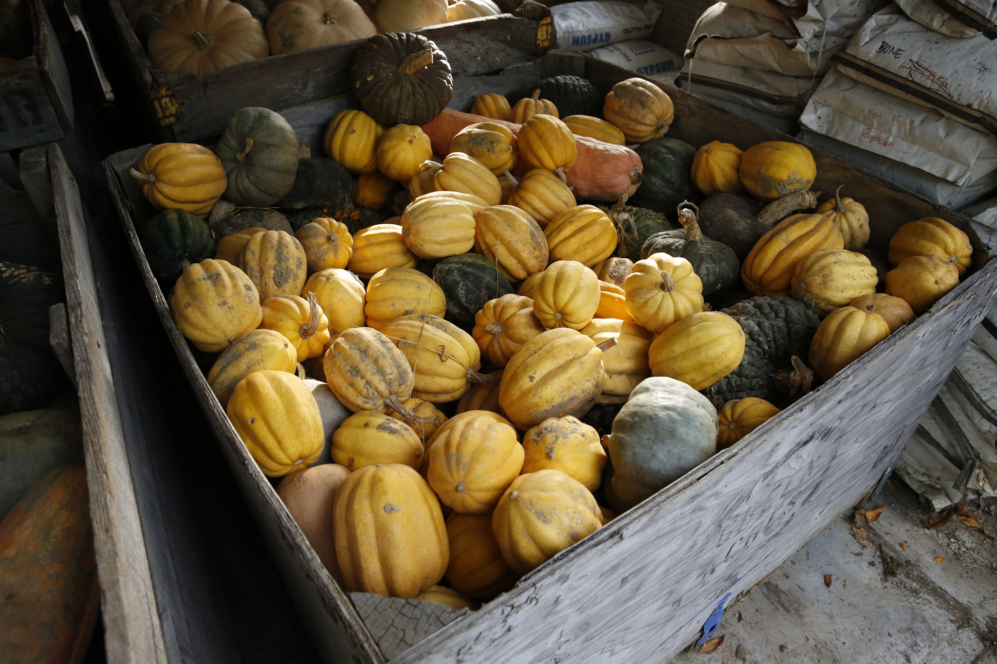 Gourds at Quail Hill Farm