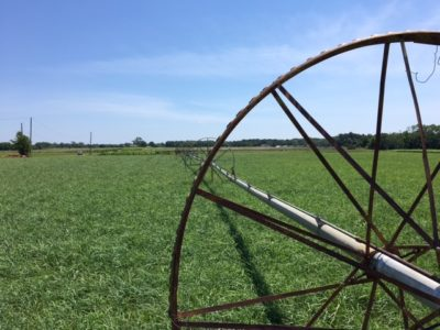 Irrigation wheel spoke on grass