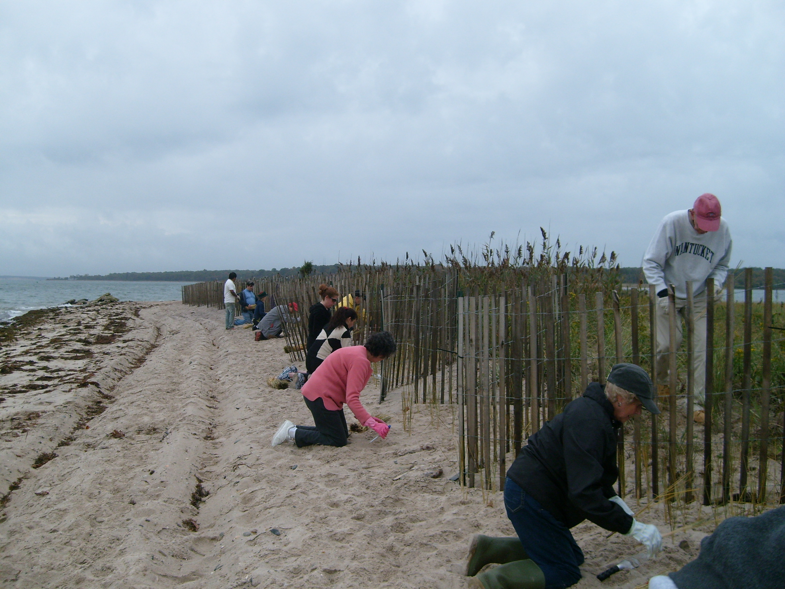 Planting Beachgrass